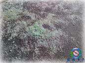 road salt close up